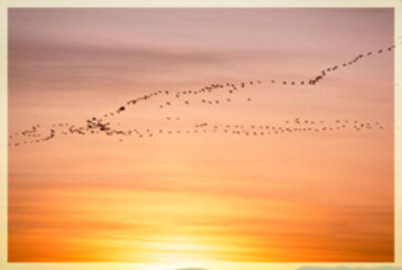 Spotlight: Migratory Birds