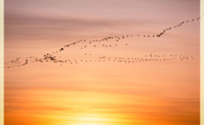 Spotlight: Migratory Birds