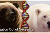 Hybridization out of necessity