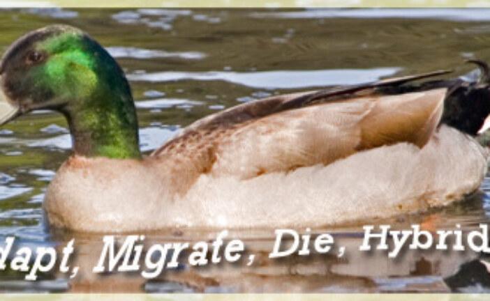 Adapt, Migrate, Die, Hybridize
