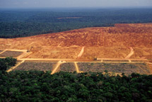 Deforestation-Brazil