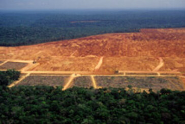 Brazil: Deforestation