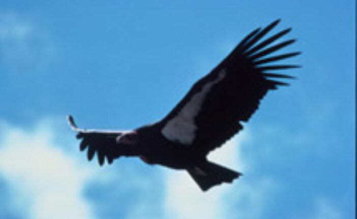 Aridland Birds