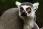 Madagascar Biodiversity