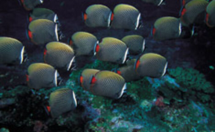 The growing diversity of fishes