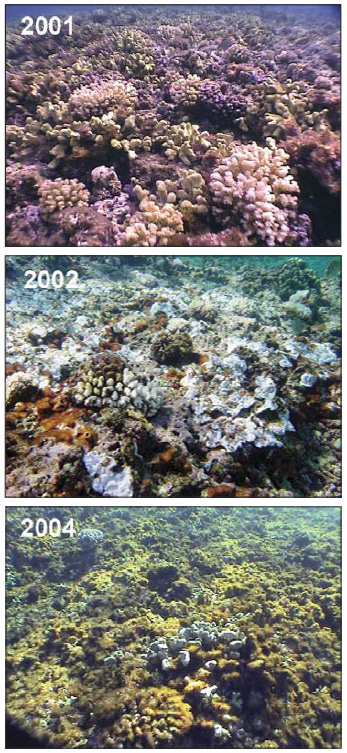 Coral decline