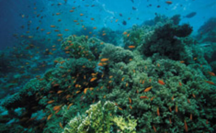 Coral Reefs – The Stats