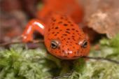 The World of Amphibians