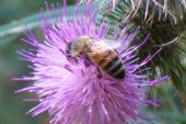 The Economics of Pollinators