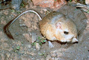 Endangered Species Act Listings