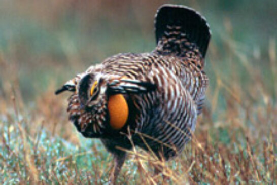 Grassland Birds by the Numbers