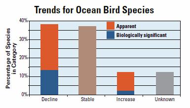 trend-ocean_birds