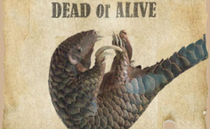 Pangolins: Wanted, Dead or Alive