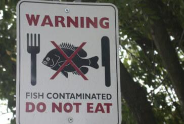 All fish in streams contain mercury