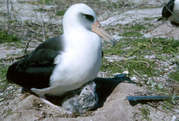 Invasive Plant Threatens Seabirds