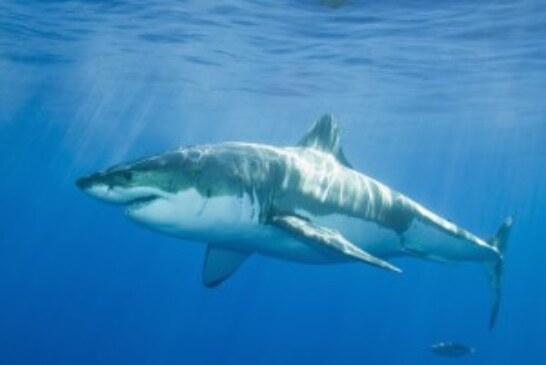 The Stats on Sharks!