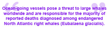 right_whale_quote