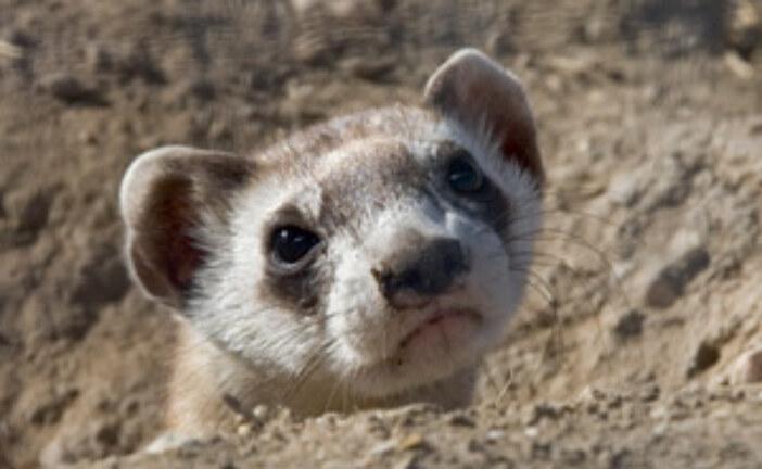 General Statistics for U.S. Endangered Species