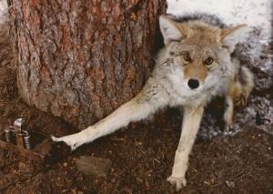 Photo Credit: Fur-Bearer Defenders'