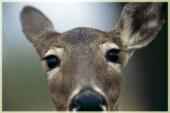 America's Wildlife Heritage Act