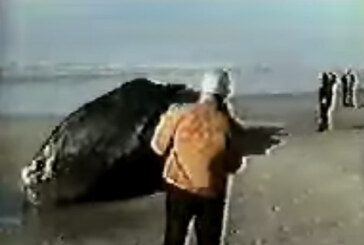 Mixing Dynamite and a Dead Whale