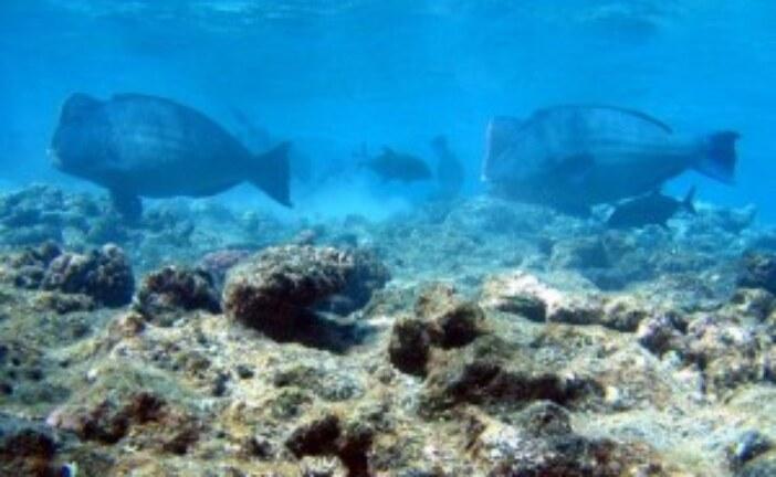 Declining Parrotfish Instill Hope but Highlight Human Flaw