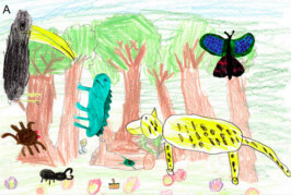 Crayons Indicate Children Lack Rainforest Biodiversity Perception