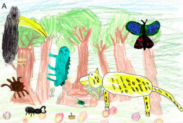 Crayons Indicate Children Lack Rainforest Biodiversity Perception