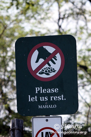 Please Let Sea Turtles Rest