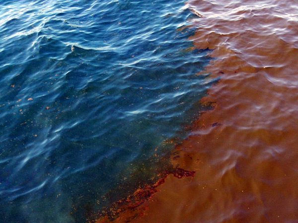 BP Deepwater Horizon Gulf Oil Spill