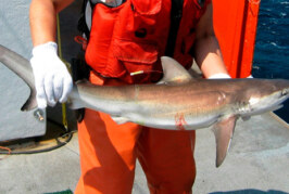 Killing Sharks: Is Ocean Science Compatible with Ocean Conservation?
