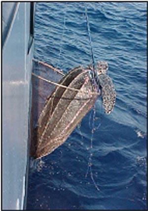 Leatherback Turtle caught on longline