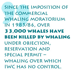 whaling-iwc
