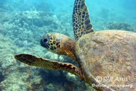 My sea turtle hazard is worse than your sea turtle hazard