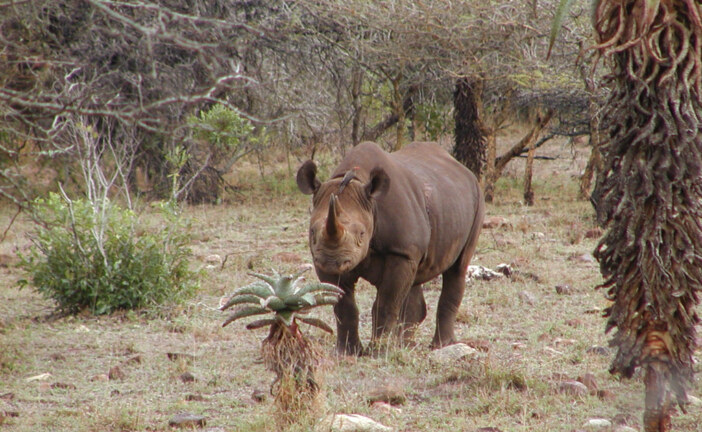 Owners of Safari Company Indicted for Illegal Rhino Hunts