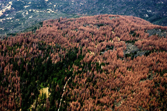 Aerial Survey Identifies More Than 100 Million Dead Trees in California